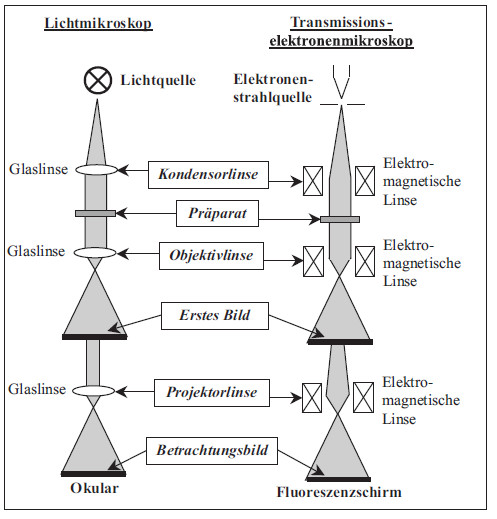 elektron unter elektronenmikroskop